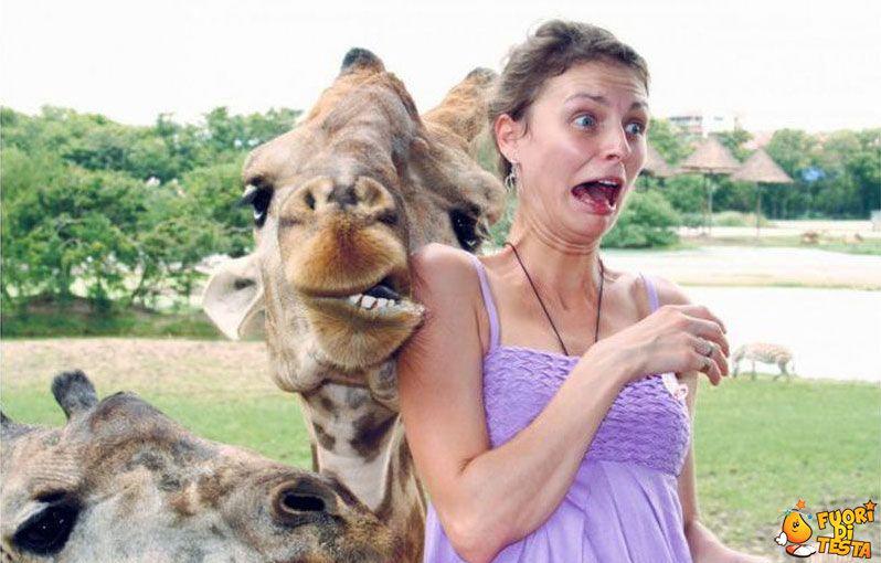 Giraffe incutono terrore