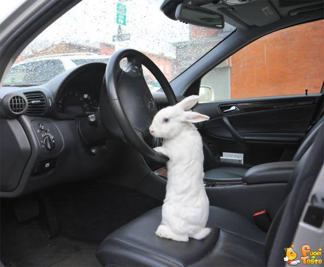 Guidare non sarà così difficile