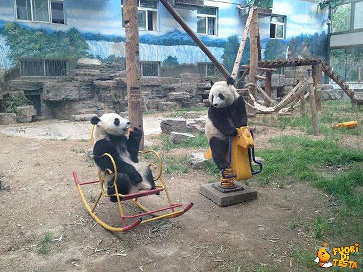 I panda giocano così