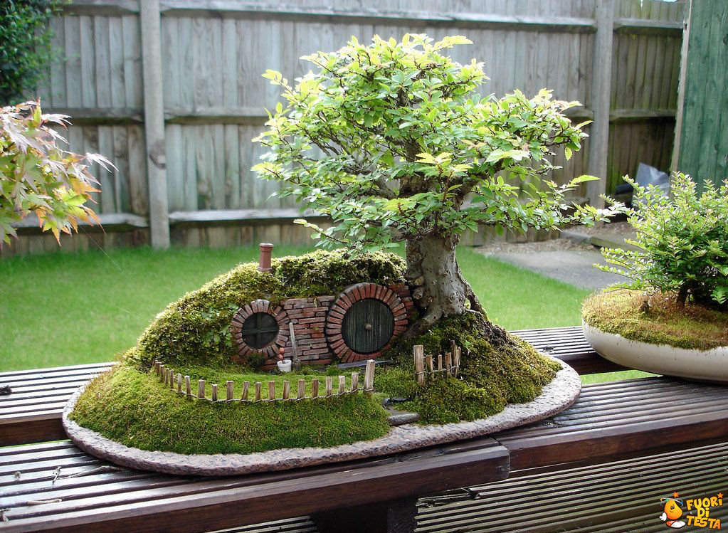 Il bonsai hobbit