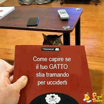Il gatto vuole ucciderti?