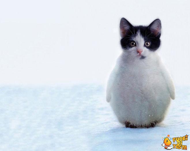 Il pinguingatto