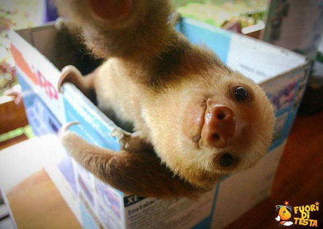 Il selfie di un bradipo