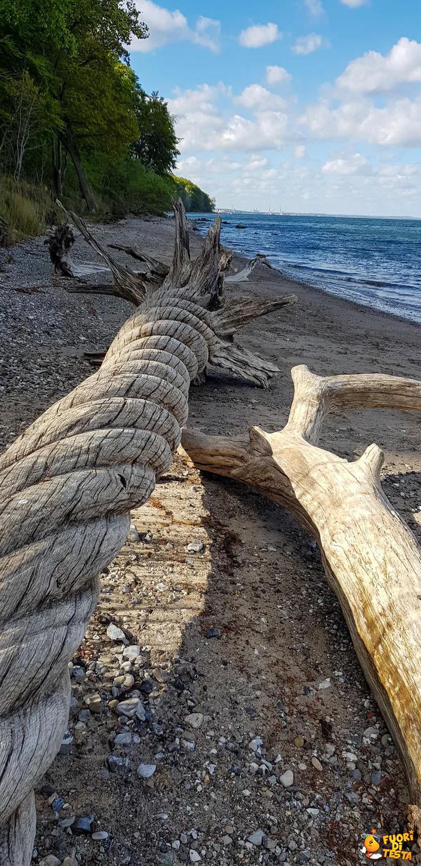 Un incredibile tronco a spirale