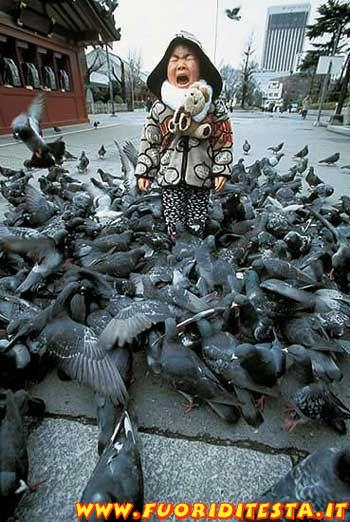 Invasione di piccioni