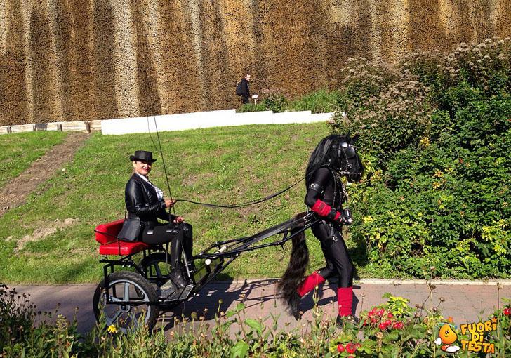La carrozza e il cavallo