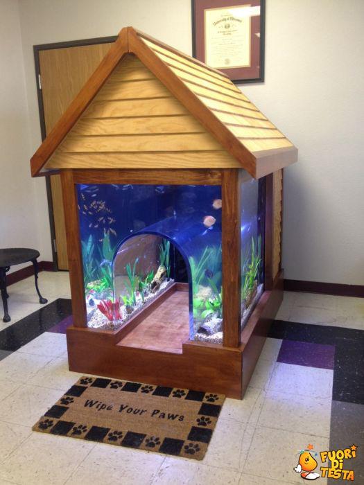 La cuccia-acquario