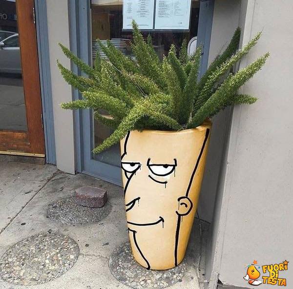 La strana pianta