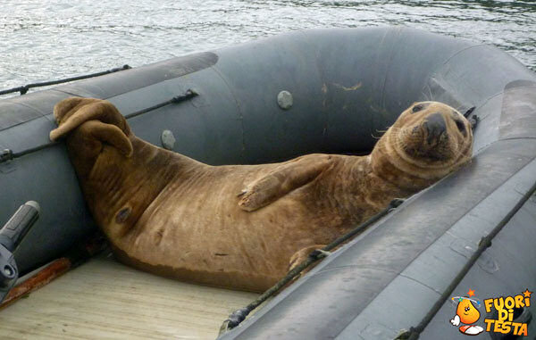 Leone marino si gode la vita