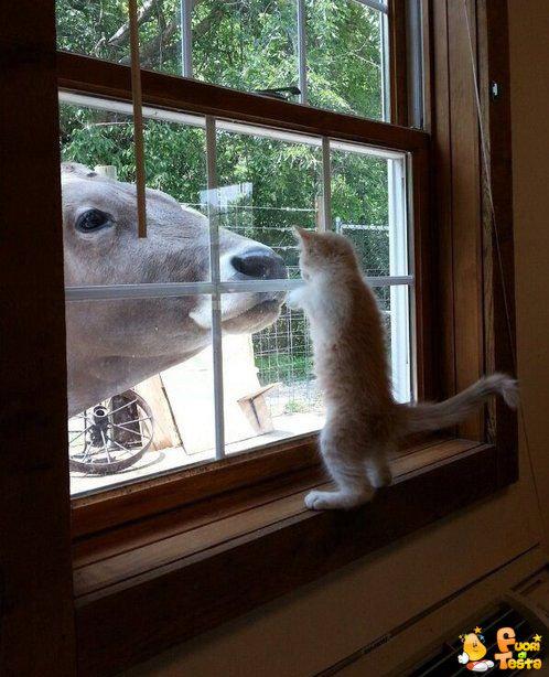 Mi dai un po' di latte?