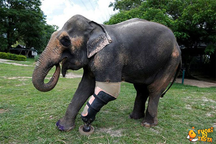 Nuova vita per un elefante