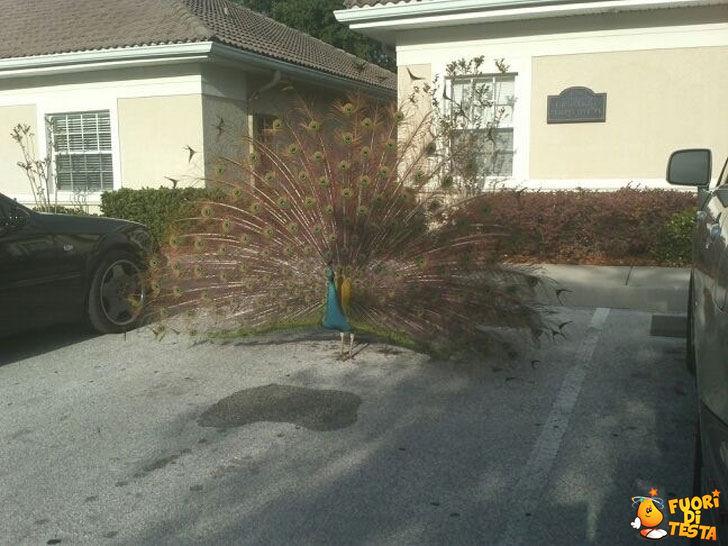 Parcheggio pavoni
