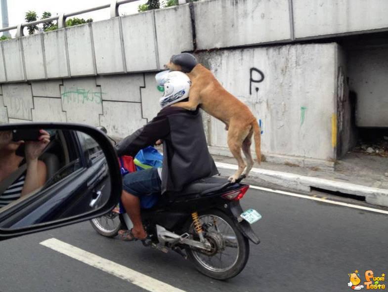 Presto, insegui quel taxi!