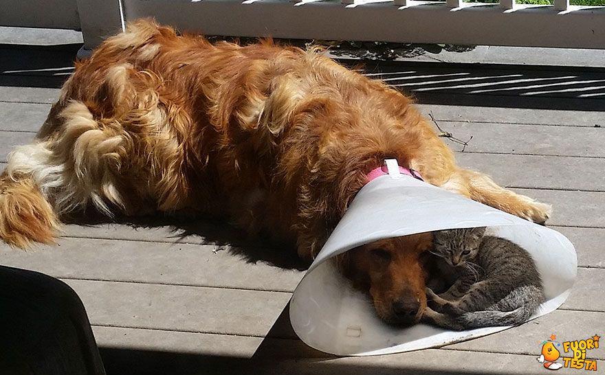 Questa è vera amicizia