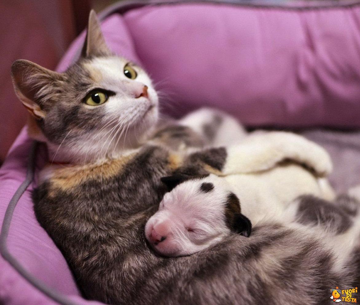 Questo cuscino è comodo!