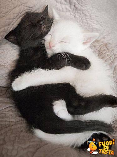 Questo è l'amore