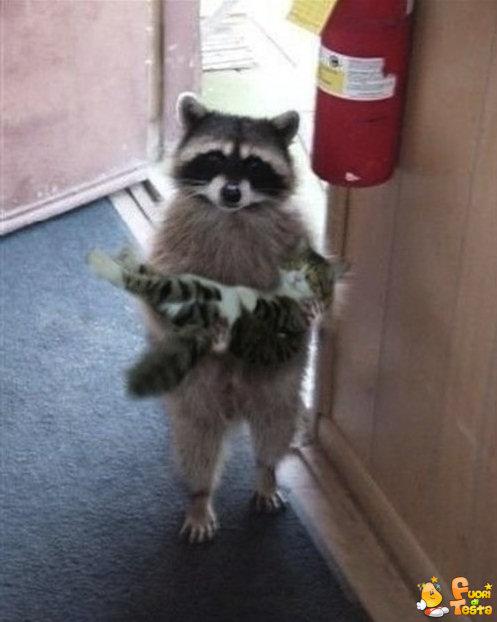 Scusa, è tuo questo gatto?
