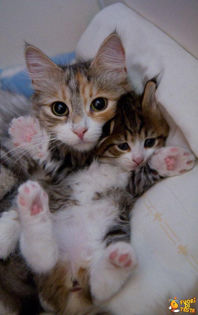 Mamma gatta e suo figlio