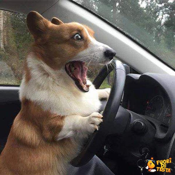 Sto guidando, sto guidando!