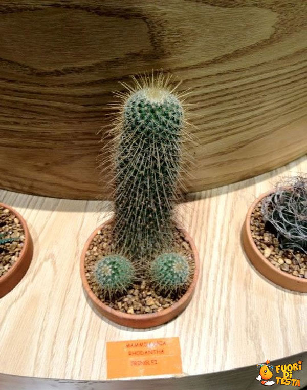 Strane piante grasse - Immagini divertenti