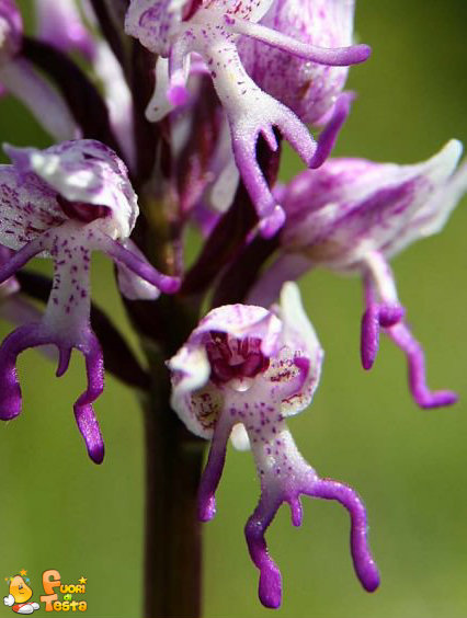 Strani fiori