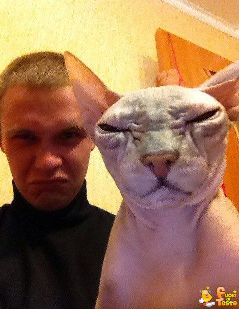 Tale padrone, tale gatto