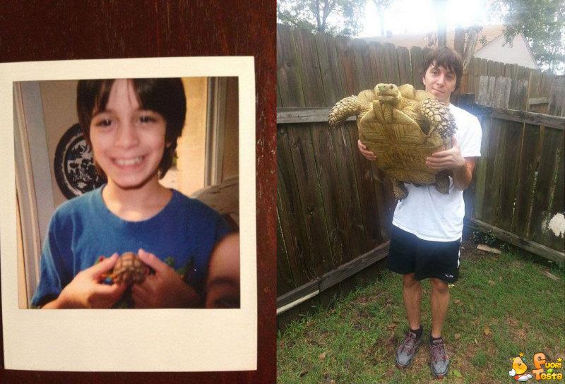Tartaruga troppo cresciuta