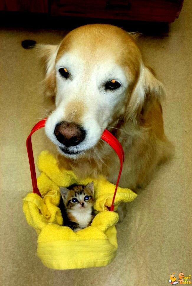 Ti ho portato un regalo!