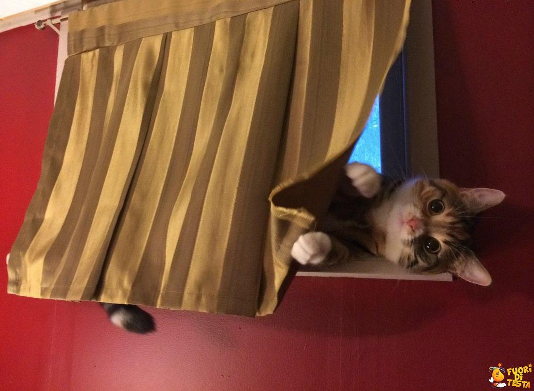 Ti va di giocare a nascondino?