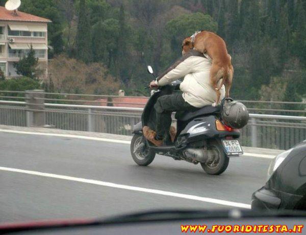 Trasporto animali