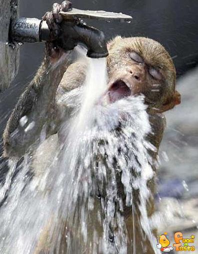 Troppa sete!