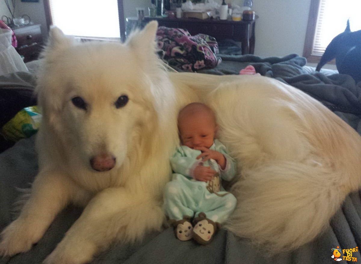 Un baby sitter molto morbido