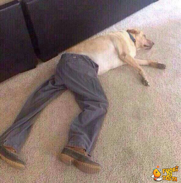 Un cane ben vestito