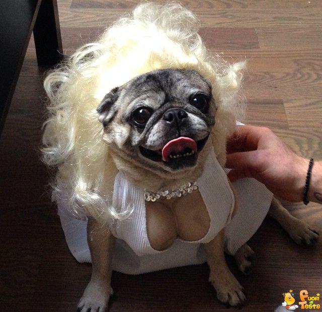Conosciuto Un cane molto sensuale - Immagini divertenti VO74