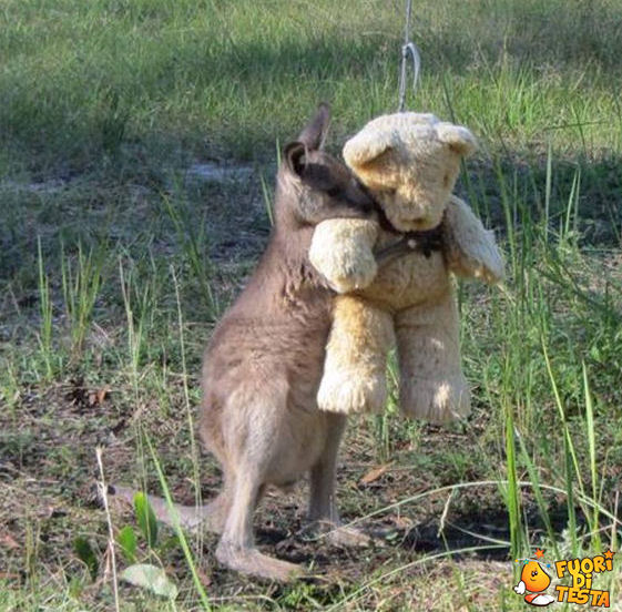 Un canguro e il suo amico