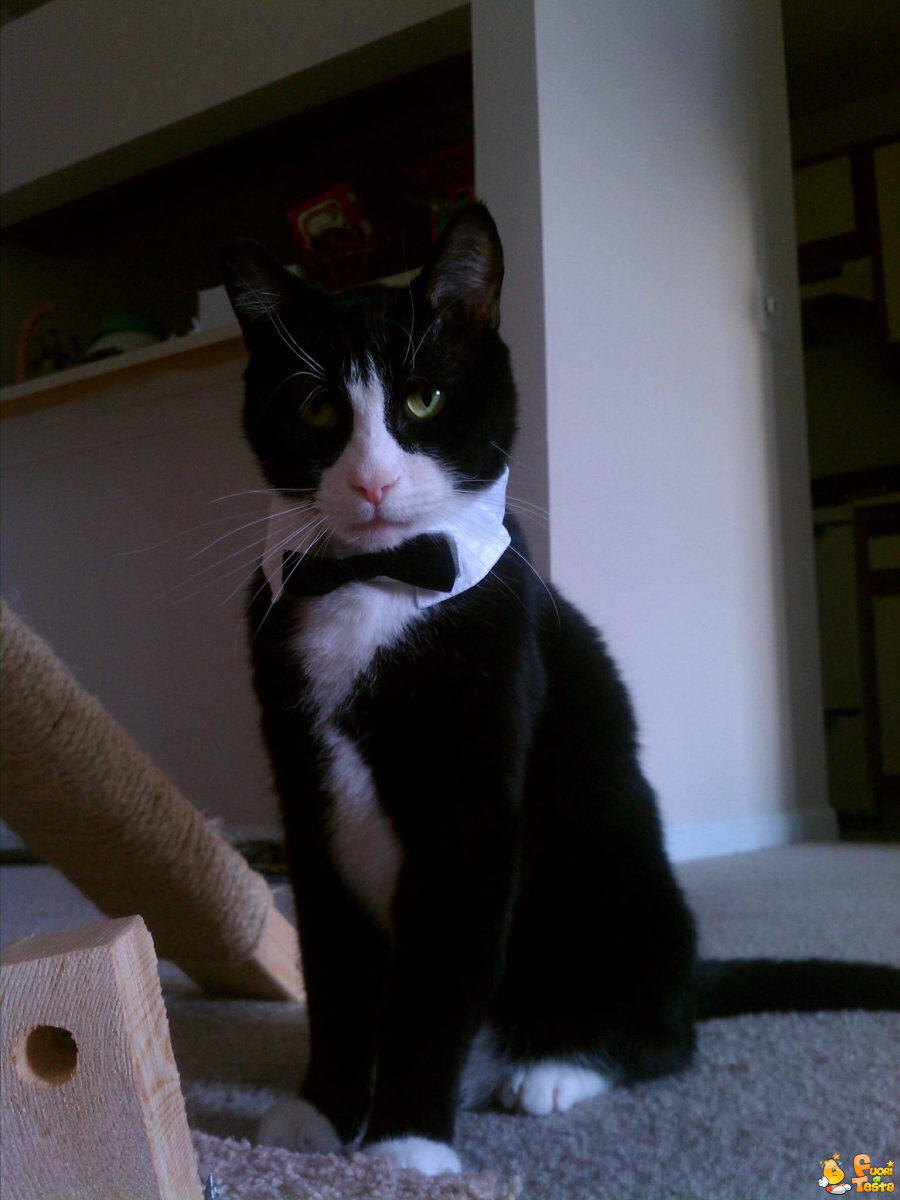 Un gatto molto elegante!