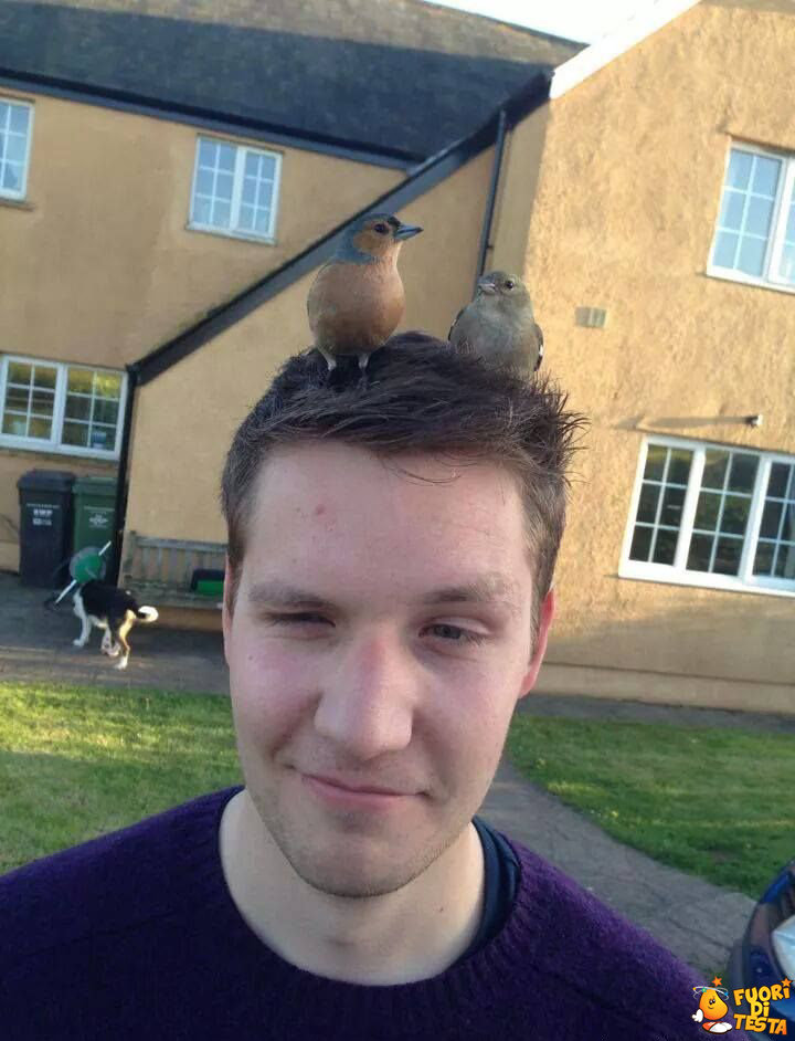 Un nido in testa