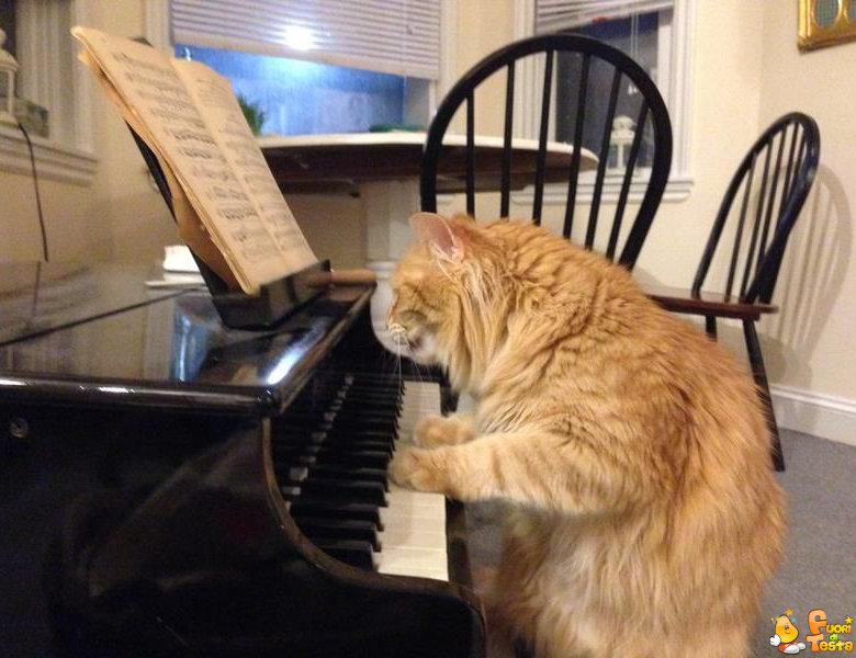Un pianista insolito