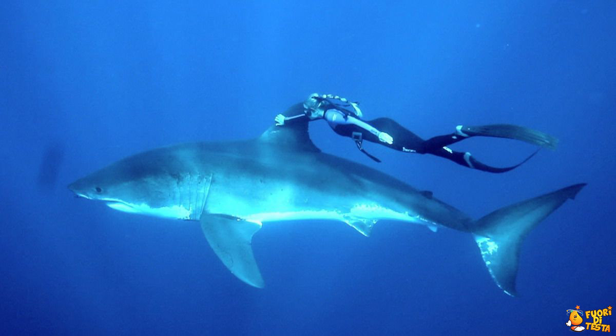 Una carezzina allo squalo