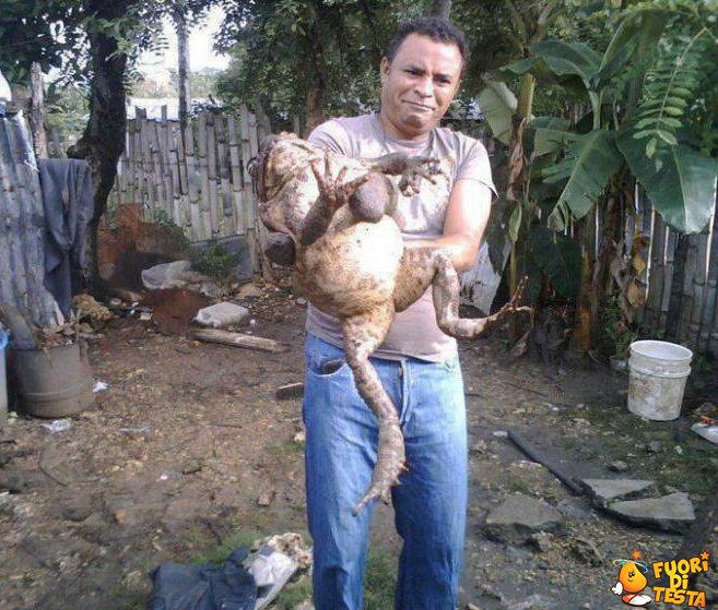 Una rana gigante
