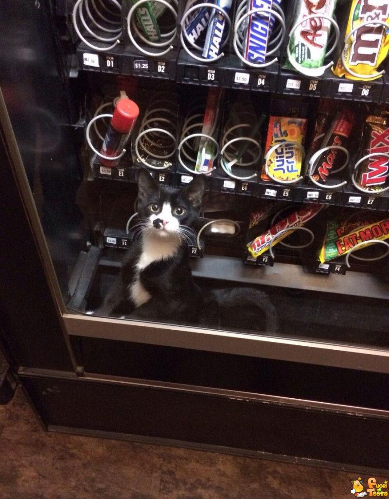 Volevo prendere un KitKat