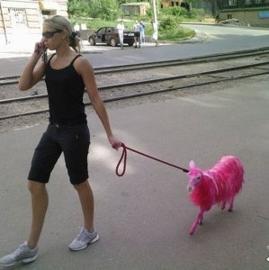 A passeggio con strani animali
