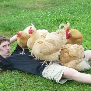 Addominali con le galline