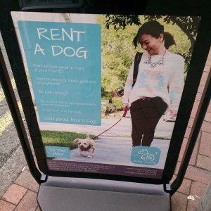 Affittare un cane