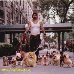 Amante dei cani
