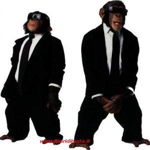 Blues scimmie