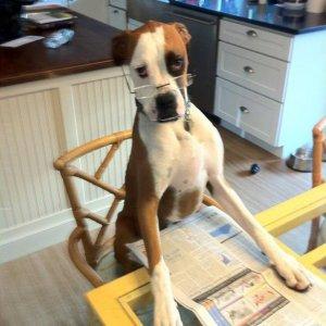 Cane che ama tenersi aggiornato