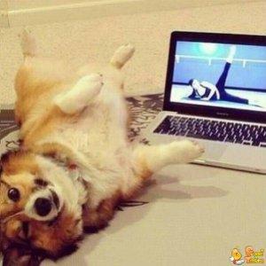Cane fa la ginnastica