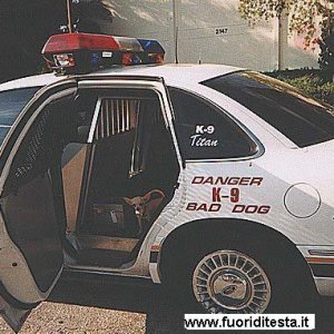 Cane pericoloso