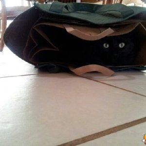 C è qualcuno dentro la borsa?